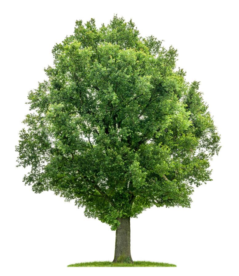 Mythos Nachhaltigkeit